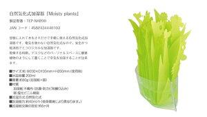 エコ加湿器本体自然気化式加湿器「Moistyplants」「モイスティプランツ」自然気化式加湿器【メール便送料無料】