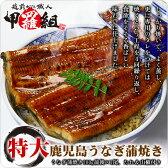 【鹿児島県産】特大うなぎ蒲焼き200g×1尾【鰻】【ウナギ】【うなぎ】