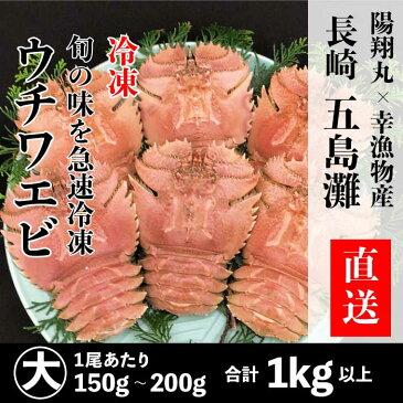長崎県産 冷凍ウチワエビ 大 1kg以上【お買い物マラソン】 【お正月・お歳暮】ギフトにもどうぞ。 伊勢海老に匹敵するおいしさ