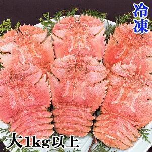 長崎県産 冷凍ウチワエビ 大 1kg以上 【お中元・ギフト】 伊勢海老に匹敵するおいしさ