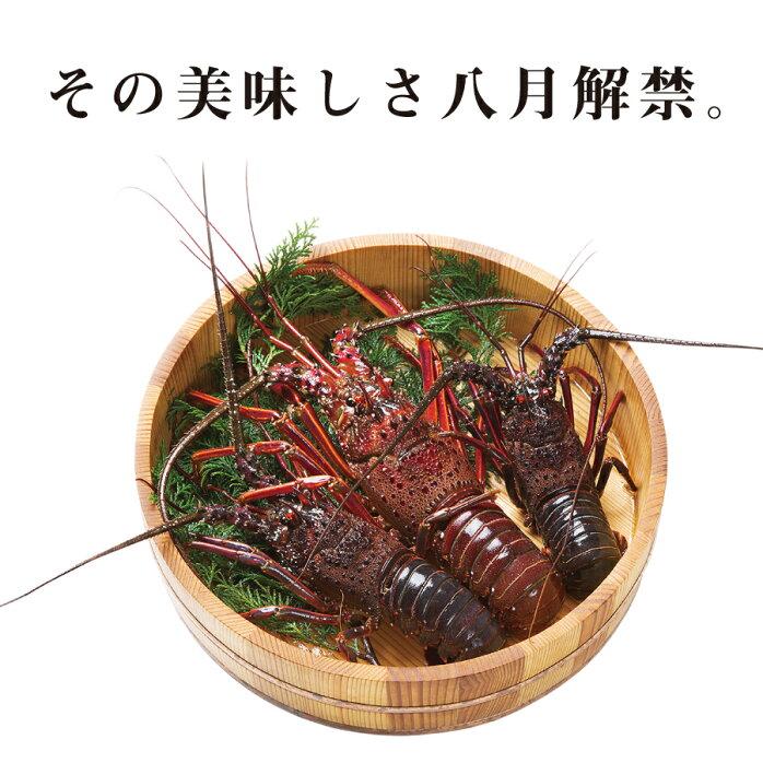 長崎県産活伊勢海老超特大1.2kg前後お刺身お味噌汁