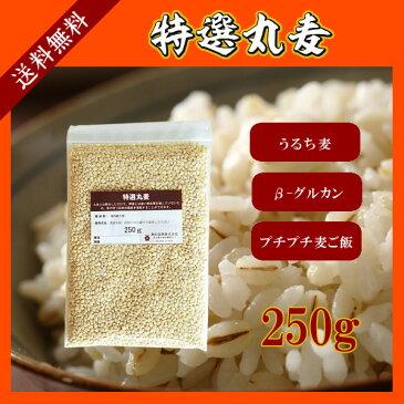特選丸麦 250g〔チャック付〕 メール便 送料無料 チャック付 国産 特選 大麦 食物繊維 βグルカン こわけや