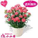【送料無料】カーネーション鉢植え(ピンク)【日付指定不可】【母の日までにお届け】
