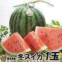 【送料無料】熊本県産冬スイカ 1玉