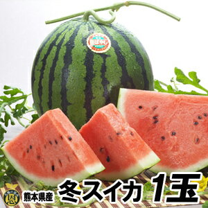 【送料無料】熊本産 秋スイカ M−1玉入