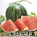 秋スイカ L−1玉入【送料無料】熊本産 西瓜