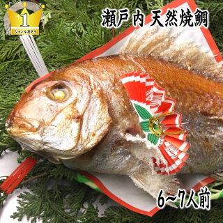 明石祝鯛焼き鯛、お食い初め等祝い鯛に最適。(淡路・明石、国産天然真鯛)