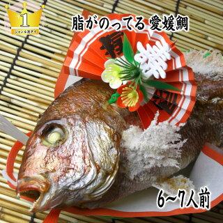 愛媛活け鯛・祝い鯛