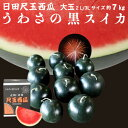 お中元 果物 フルーツ ギフト スイカ うわさの黒スイカ 1玉 7kg 種無し 日田産 すいか ポイント5倍 秀品 2L/3Lサイズ 贈答