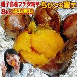 さつまいも 安納芋 訳あり あんのういも 安納いも さつまいも 生芋 鹿児島 種子島産 産地直送 プチ安納芋 (8kg x 1箱) ちびころ蜜芋8kg 小さいサイズ 予約開始 S常