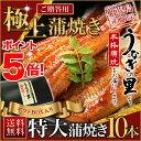 お歳暮 魚介 ギフト うなぎ 蒲焼き 国産 鹿児島産 特大蒲焼 10本...
