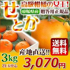 とろ〜りとろける柑橘の大トロ★いいとこどりの新品種!芳醇な香り・濃厚な甘さで皮が薄くて食...