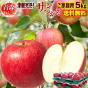 りんご 青森 津軽 サンつがるりんご 完熟 ご家庭用 5kg