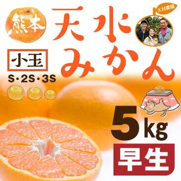 熊本 みかん 小玉 秀品 S~3S 早生 天水蜜柑 5kg 送料無料 約50個前後
