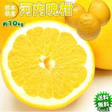 河内晩柑送料無料訳あり10kg箱込内容量9kg+補償分500gジューシーオレンジ和製グレープフルーツ