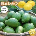 レモン 送料無料 訳あり 2kg 熊本県産