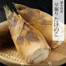 たけのこ送料無料竹の子筍タケノコ早堀り約4kg目安4本〜12本
