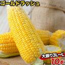 メロン並みの甘さ 生で食べられる 熊本県産 とうもろこし ゴ...