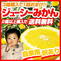 この時期しか味わえない貴重な柑橘です!!ジューシーみかんは、ジューシーオレンジ、河内晩柑、...
