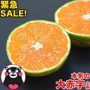 【緊急クーポンで777円】小玉...