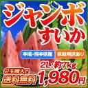 デカイ!甘い!みずみずしい!日本でも随一の産地・熊本の最高に美味しいスイカをお届けします!日本一の産地・熊本から最速級直送!【2玉購入で送料無料】熊本県産ハウス栽培・超ジャンボすいか1玉2L(約7kg)