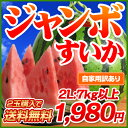デカイ!甘い!みずみずしい!日本でも随一の産地・熊本の最高に美味しいスイカをお届けします...