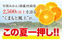 冷凍みかん 熊本県産 冷凍 小玉 みかん 皮付き 1.5kg 500g×3袋 送料無料 2s~3s 2s 3sサイズ フルーツ 小玉 果物 柑橘 取り寄せ 通販 アイス シャーベット 2セットで1セットおまけ 【《1-5営業日以内に出荷予定(土日祝日除く)》 3