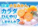 冷凍みかん 熊本県産 冷凍 小玉 みかん 皮付き 1.5kg 500g×3袋 送料無料 2s~3s 2s 3sサイズ フルーツ 小玉 果物 柑橘 取り寄せ 通販 アイス シャーベット 2セットで1セットおまけ 【《1-5営業日以内に出荷予定(土日祝日除く)》 2