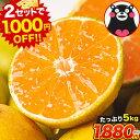 【2セットで1000円OFFクーポン!!】 熊本 みかん た
