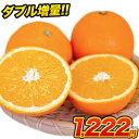 ネーブル オレンジ 1.5kg 送料無料 訳あり 安心安全 熊本県産 旬 の みかん 2セット購入で1セット 3セット購入なら3セット増量 ※複数購入の場合1箱におまとめ配送 《3月中旬-4月上旬頃より順次出荷》