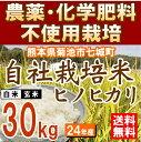 【送料無料】【安心の自社栽培米・5kg×6袋】特A米産地 熊本県菊池市七城町で農薬及び化学肥料を一切使用せずに育てたお米です。放射能検査済み。【白米or玄米選べます】【農薬・化学肥料不使用 放射能不検出】平成24年産 自社農園産ヒノヒカリ 30kg(5kg×6袋)【熊本県産】【送料無料】【九州 熊本 菊池 七城 米 お米 こめ 放射能検査済み】