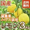 【代引不可・同梱不可】熊本産減農薬レモン3kg【送料無料】【国産ハウス栽培檸檬リスボン】