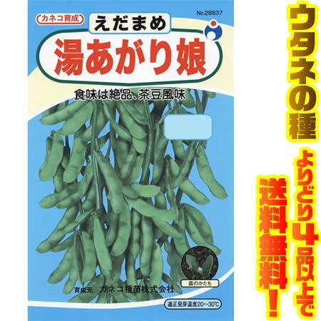【メール便】ウタネ 湯あがり娘枝豆 28837茶豆風味の美味しい枝豆