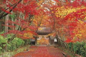 ◆希少品◆2016ベリースモールピースジグソーパズル『紅葉の参道 光明寺-京都』《廃番商品》