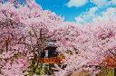 1000ピースジグソーパズル 桜咲く高遠城址公園-長野 《廃