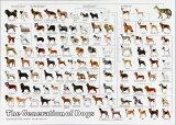 3000スモールピースジグソーパズル 犬の系統図2 《廃番商品》