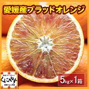 ファミリー ブラッド オレンジ タロッコ