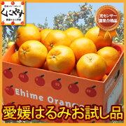 センサー デコポン オレンジ