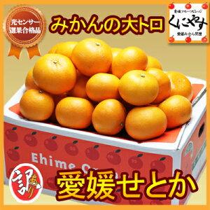 【せとか】【みかん】【送料無料】【究極の柑橘】訳あり愛媛産せとか5kg 安心光センサー選果合格…
