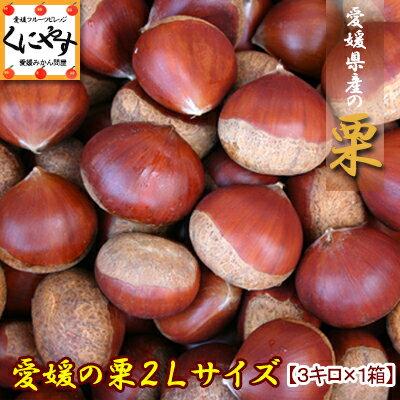愛媛産中生栗2Lサイズ3キロ(約105-120個入り)
