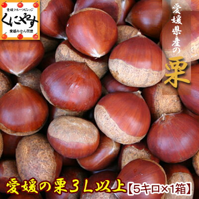 愛媛産中生栗3L以上5キロ(約150-165個入り)生栗