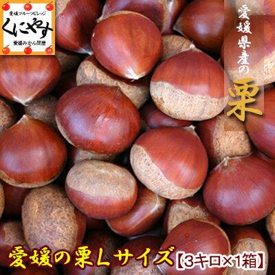 愛媛産中生栗Lサイズ3キロ(約130-165個入り)生栗