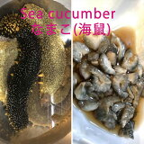 ナマコ 赤なまこ (8−10人前)1kg(4-7個)【送料無料 業務用 香川県産ナマコの中で一番美味しい アカナマコ ご注文後、水揚げ次第発送 なまこ このわた なまこ酢 海鼠 】
