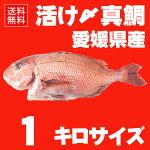 【今だけレビューで送料無料】活け〆の真鯛を丸ごとお届け!1kg前後◆愛媛を筆頭に最良の鯛をお届けします!(養殖:冷蔵便でお届け)