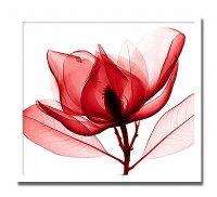 【送料無料】「RedMagnolia」【X-rayPhotograph】StevenN.Meyers(エックスレイフォトグラフインテリアアートフレーム)[絵画通販]