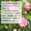 Japanese GIN 和美人 ダマスクローズ 本坊酒造 鹿児島 495ml 45% 2