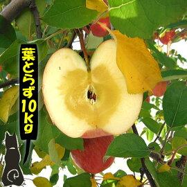 葉とらずサンふじりんご10キロ