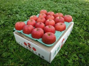 優品サンふじりんご5キロ