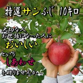 特選サンふじりんご10キロ