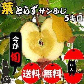 葉とらずサンふじりんご5キロ